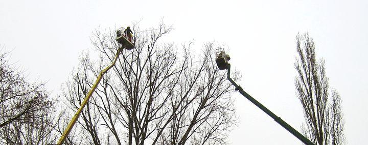 Hubarbeitsbühnen in der Baumpflege
