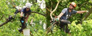 Baumkletter und Baumkletterin mit Ausrüstung im Baum