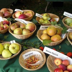unterschiedliche Apfelsorten in Körben auf einem Tisch