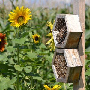Insektenhotel vor einer Sonnenblumenwiese
