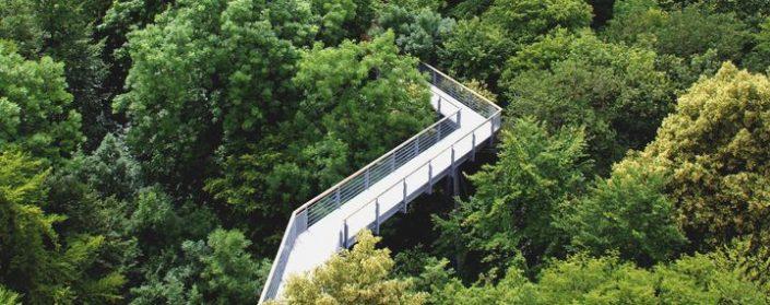 Stahlbrücke führt in den Kronen des Waldes