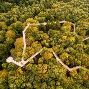 Holzpfad auf Stelzen schlängelt sich durch Baumkronen
