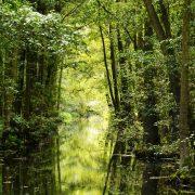 Wasserkanal im Wald