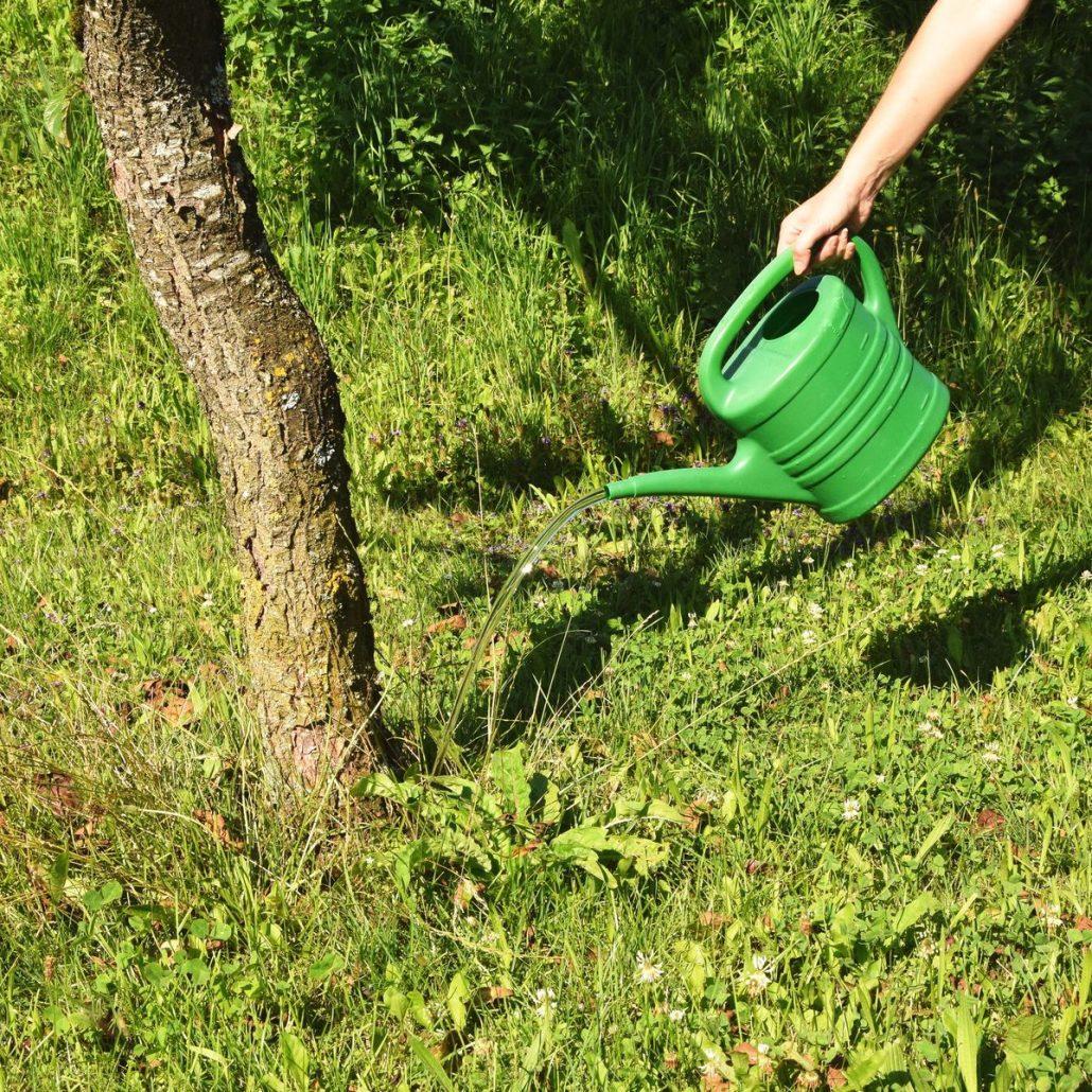 Wann Sind Fruchtbaren Tage Lichterfelde: Trockenheit & Dürre: Wann Muss Ich Bäume Gießen