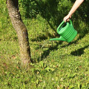 Hand mit Gießkanne gießt einen Obstbaum im Garten
