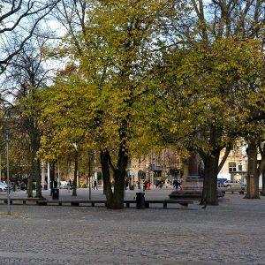 Bäume auf einem Platz in der Stadt. Die Pflastersteine reichen bis an den Stamm.