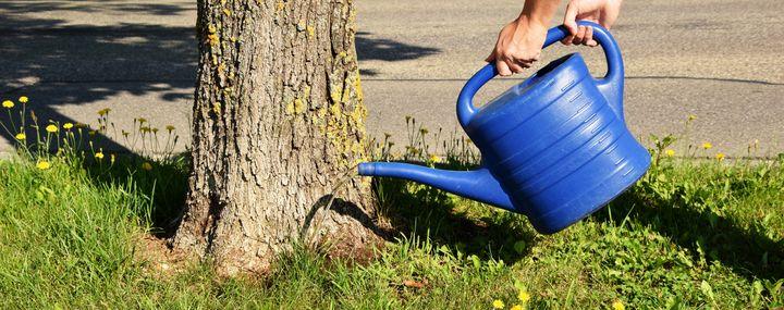 Hand mit Gießkanne gießt einen Straßenbaum