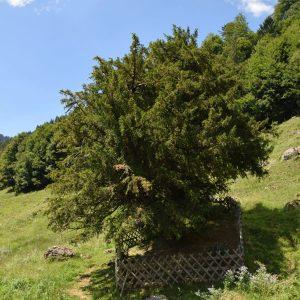 Kleiner eingezäunter Baum auf einer Wiese
