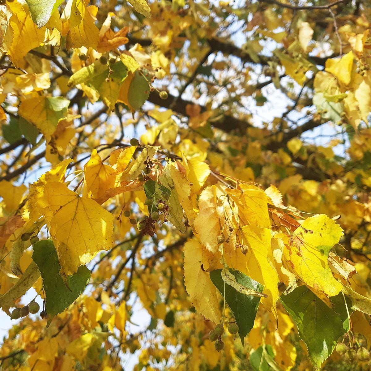 Trockenheit & Dürre: Wann muss ich Bäume gießen?
