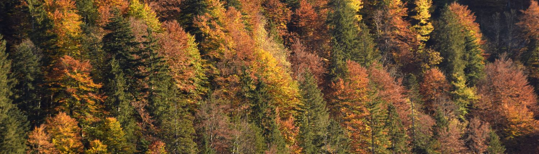 Berghang mit Nadel- und Laubbäumen im Herbstkleid