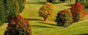 Bäume mit verfärbten Blättern auf einer Wiese