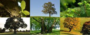 Verschiedenen Bilder von Bäumen