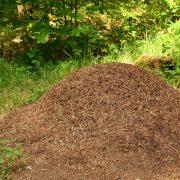 Großer Ameisenhaufen