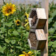 Insektenhotel aus zwei Kammern vor einem Sommenblumenfeld.