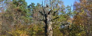 Alter abgestorbener Baum im Wald