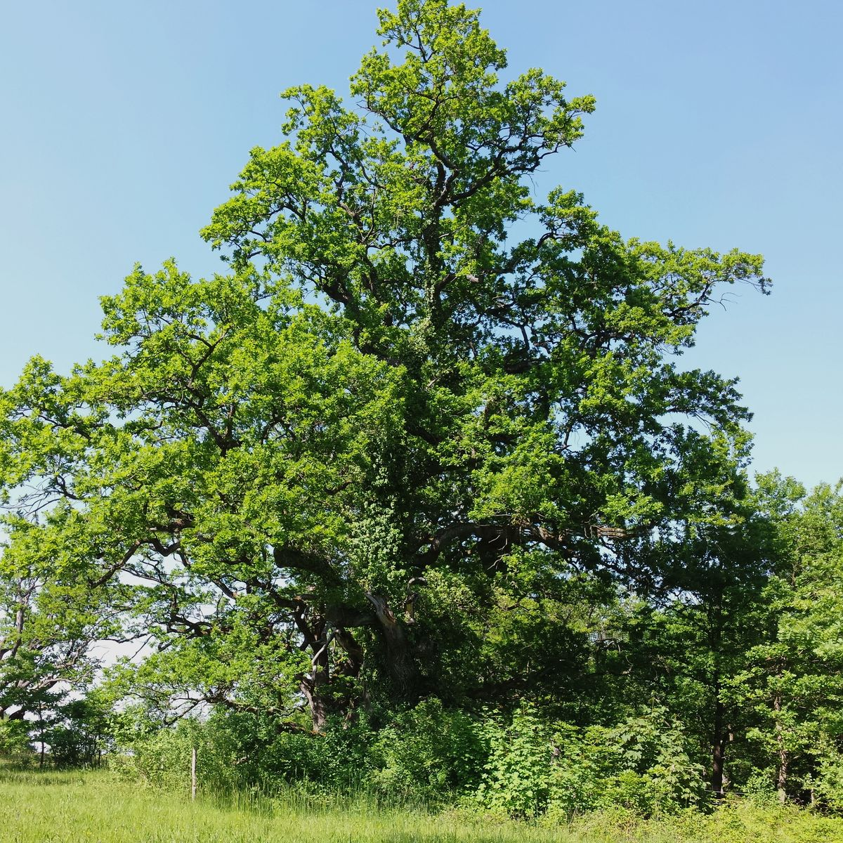 Warum werden Bäume so alt?