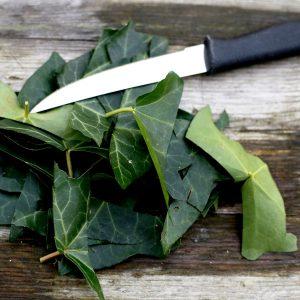 Geschnittene Efeu-Blätter