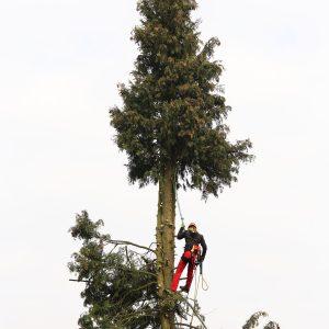Häufige Fragen zur Baumfällung in Berlin und Brandenburg