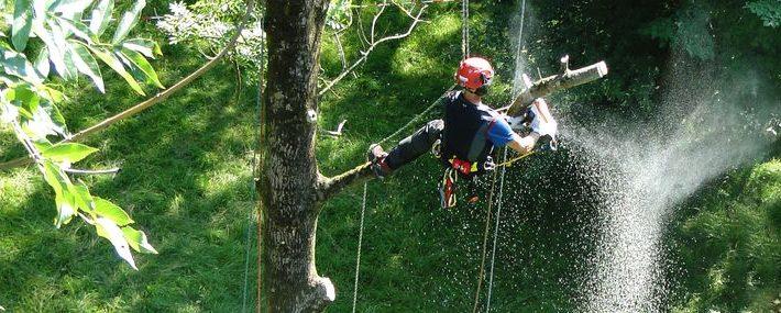 Baumkletterer im Baum. Er sägt gerade einen Ast mit der Motorsäge ab.