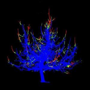 Baumscan in verschiedenen Farben vor schwarzem Hintergrund