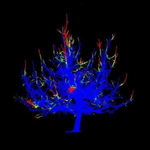 Baumscan in verschiedenen Farben