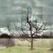 Baumfoto mit roter Linie