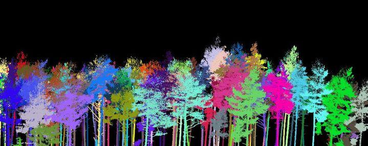 Digitale Bäume in verschiedenen Farben