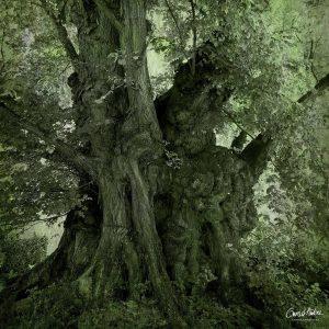 Baum des Jahres 2019: Die Flatterulme