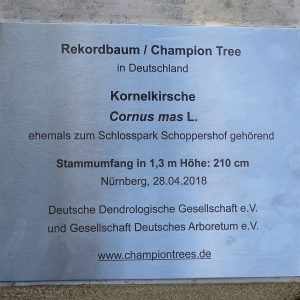 Champion Tree 2018: Kornelkirsche in Nürnberg