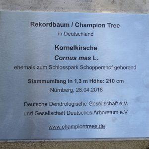 Infotafel für den Rekordbaum 2018