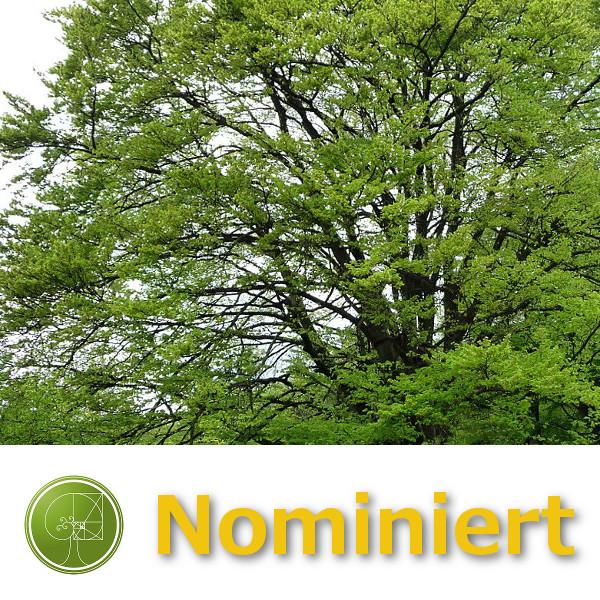 Axel Tuor Baumpflege