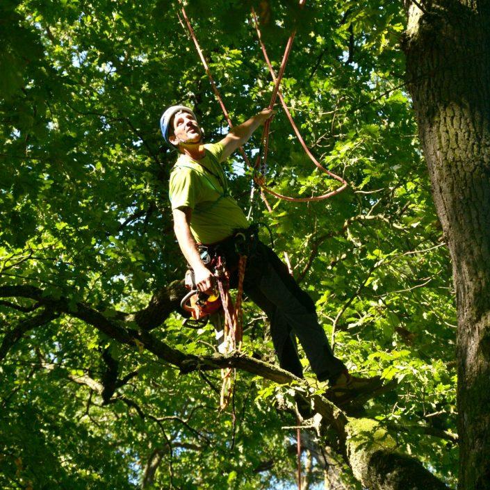 Baumpfleger steht auf einem Ast und plant den nächsten Schritt
