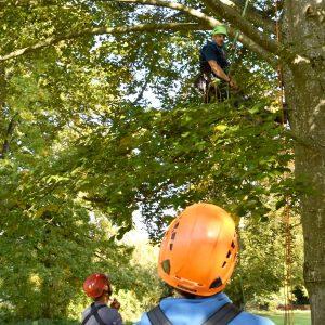 Ausbilder im Baum, die Schüler stehen unter der Krone.