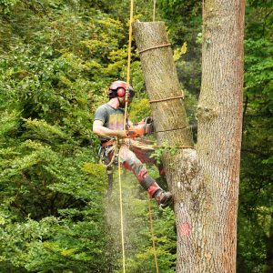 Der passende Baumpfleger für mein Baumproblem