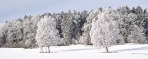 190212_Baeume-Winter-Strategien_header