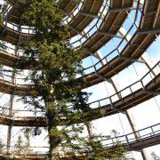 Baum von einer Holzkonstruktion zum Begehen umschloßen