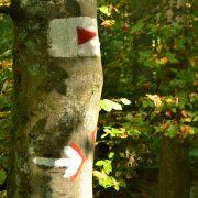 Buchenstamm mit Wanderzeichen