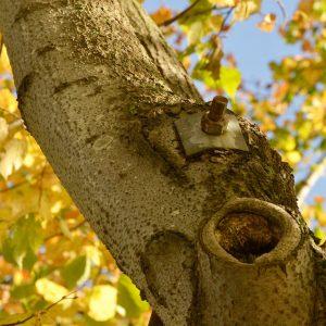 Platte und Schraube am Baum.