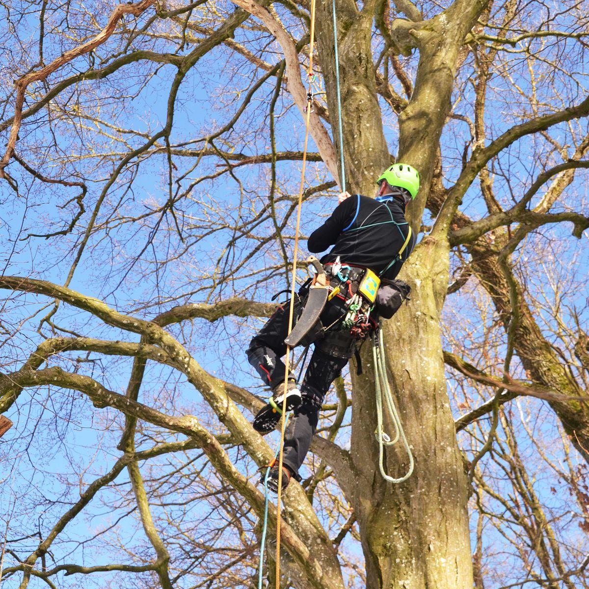 Baumpfleger klettert am Seil einen Baum hoch.