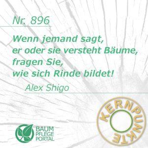 Alex Shigo: Kernpunkte