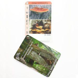 BFW Pilzfächer – Holz zerstörende Pilze