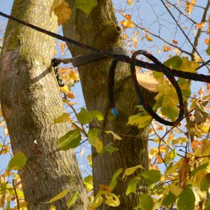Eine Kronensicherung an einem Baum