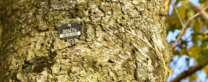 Baumnummer an einem Baumstamm.
