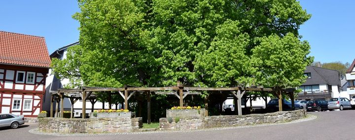 Starke Baumtypen: Die Linde von Schenklengsfeld