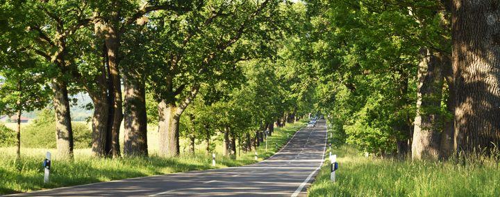 Starke Baumtypen: Die Seefelder Allee
