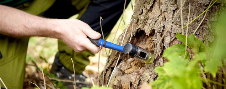 Digitales Baummanagement: Vorteile professioneller Baumsoftware