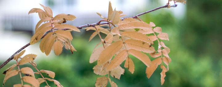 Baumbad: Trockenstress bei Bäumen. Anzeichen und Massnahmen.